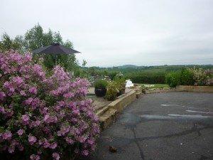 Autre petit aperçu du jardin de Trix ! p1090678-300x225