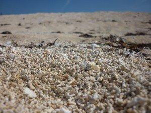 Plage du Connemara... mais pas une plage de sable ! Une plage de Coraux !! p10907411-300x225