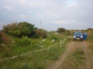 Champs dans lequel on a planté la tente et mit les chevaux, avec la mer juste derrière ! p1090834-300x225